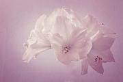 IO2A5758 lila
