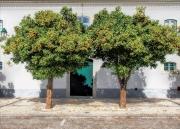 00184Portugalsko-Edit Dva stromy