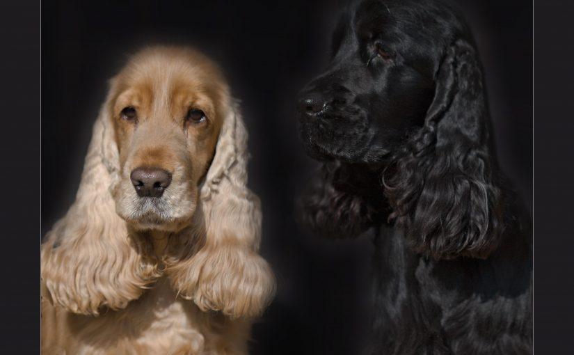 Naši psové